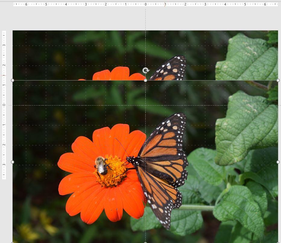 ppspotlight-b.jpg